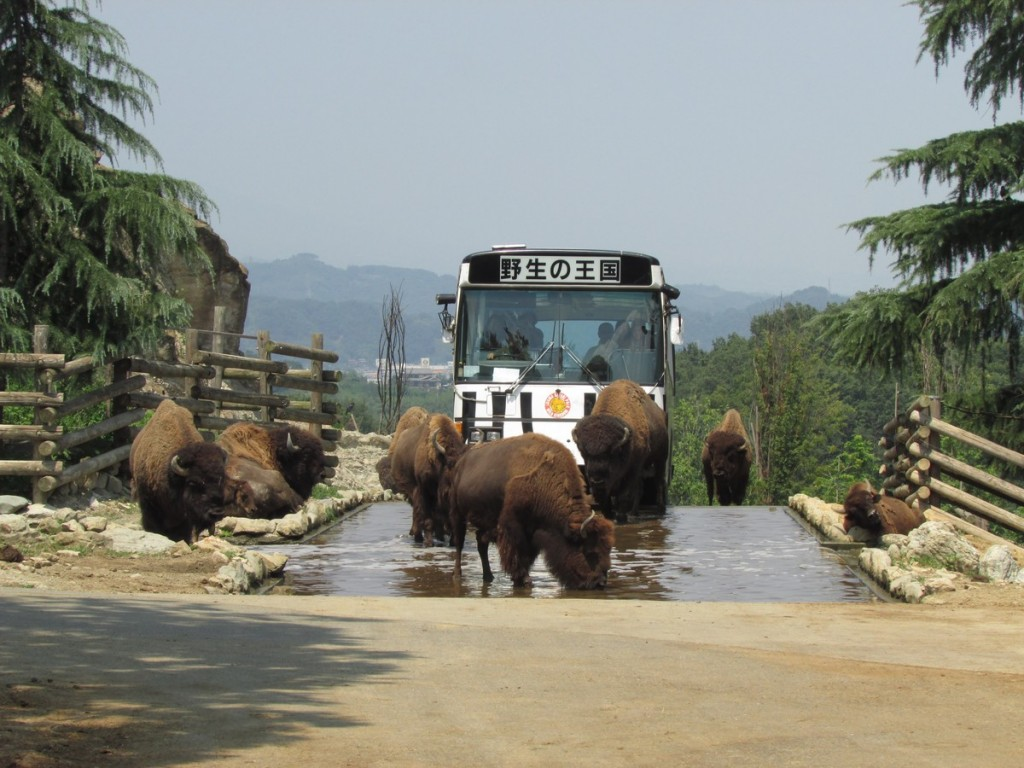 gunma_safari_130812 352