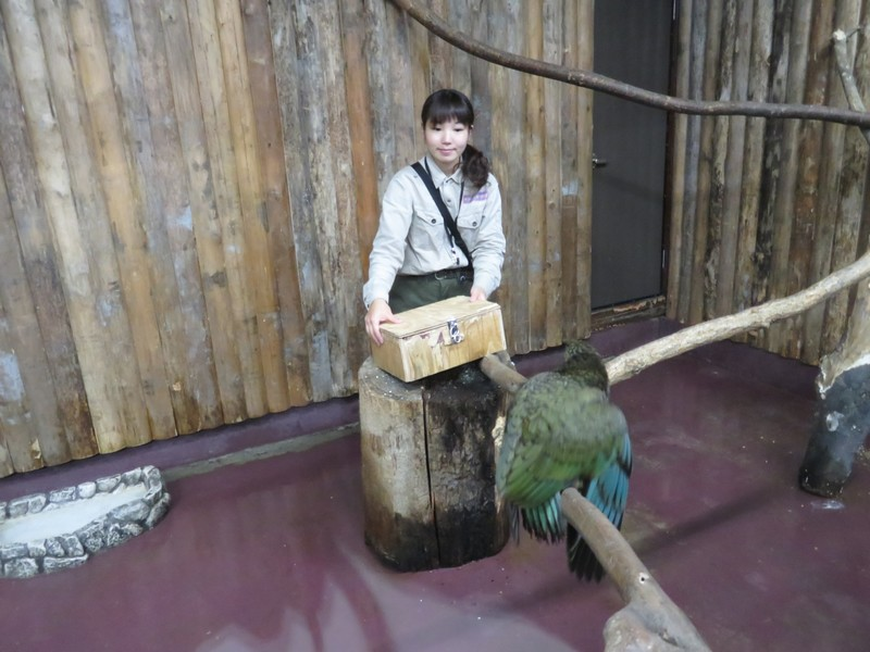 kobe_animal_161122 018