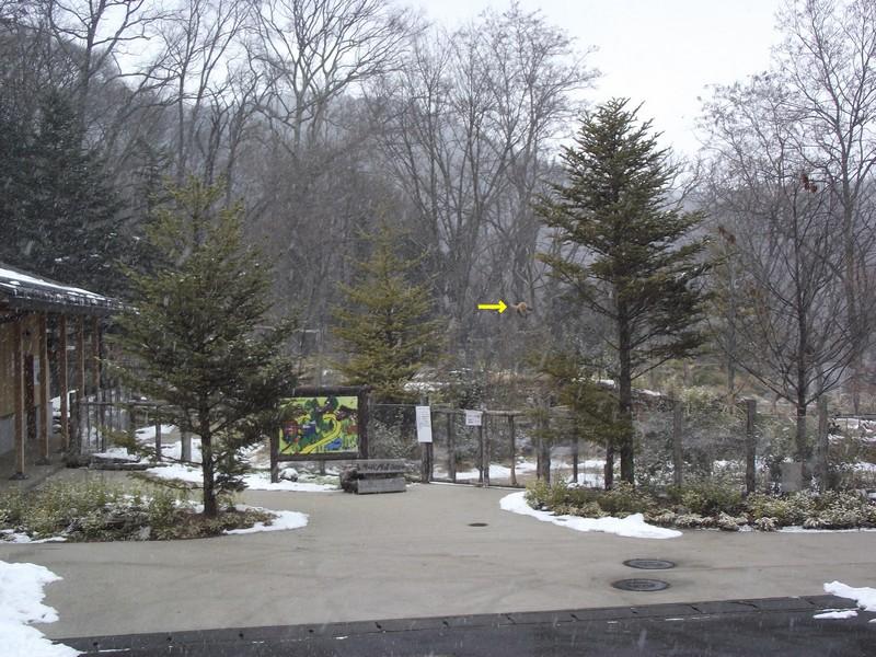 茶臼山110112 202r