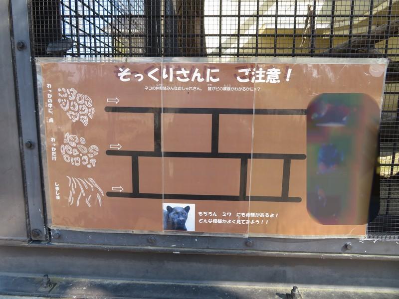 kyotoshi_170328 016r