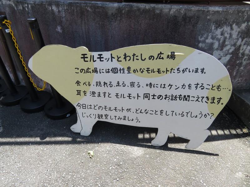 omutashi_180709 (76)