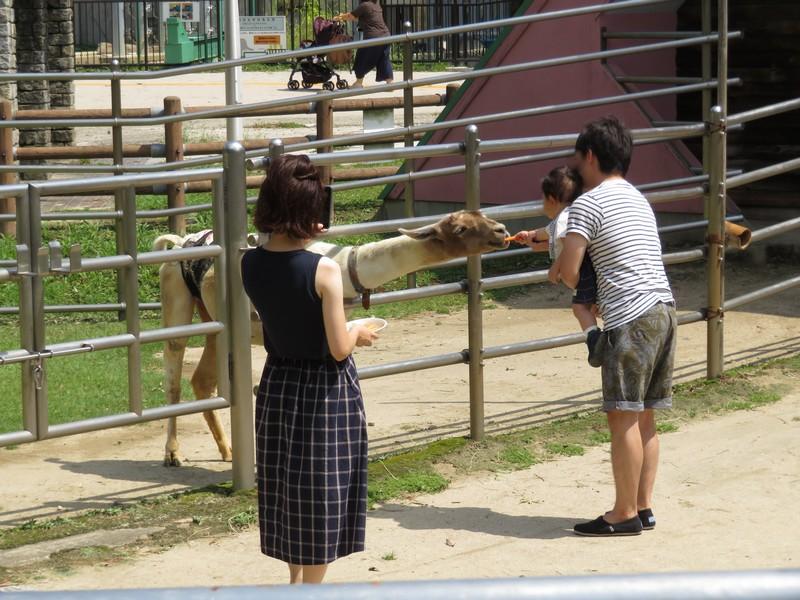 okazakishi_higashi_180905 (533)r