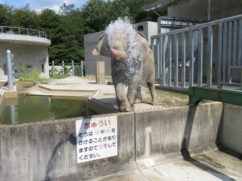 okazakishi_higashi_180905 (835)