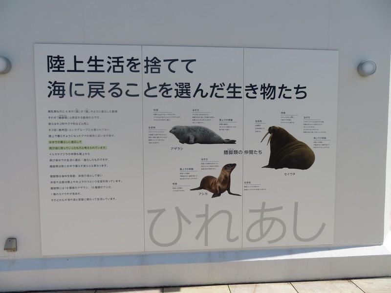 maruyama_190913 (450)