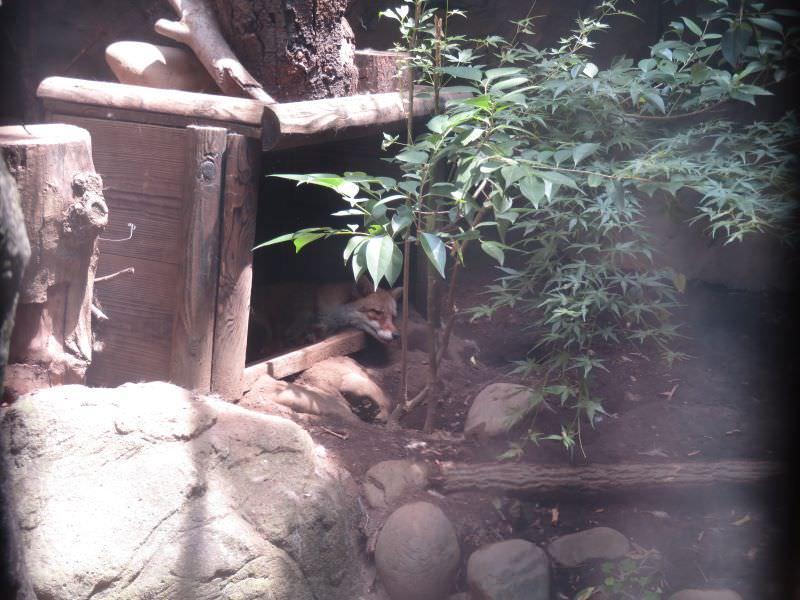 inokashira_200609 (132)