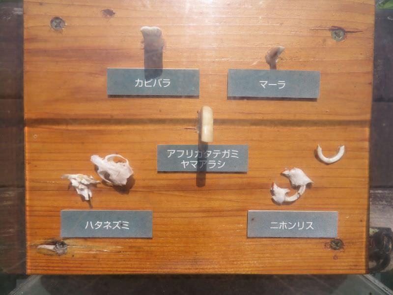 inokashira_200702 (68)