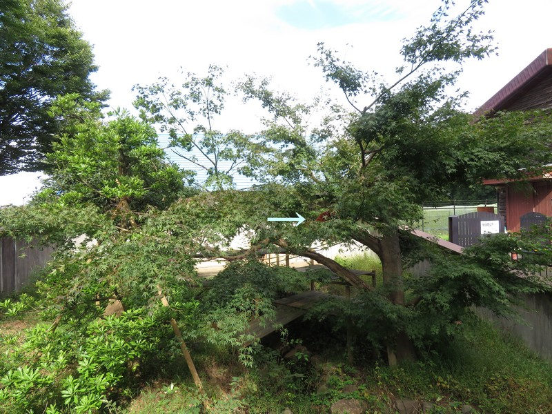 ichikawashi_201022 (2)r