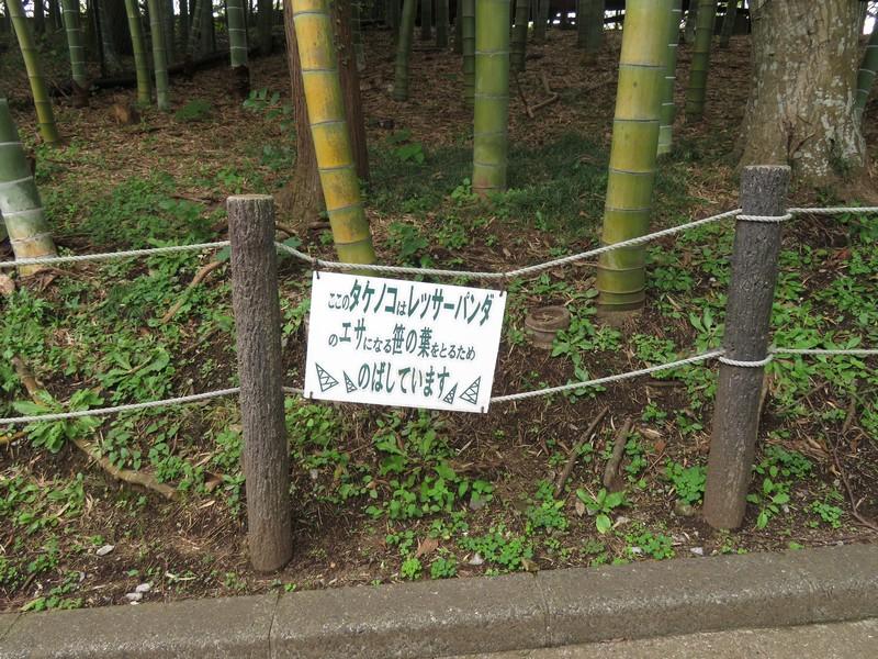 ichikawashi_201022 (395)